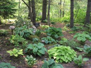 Hosta Garden '05