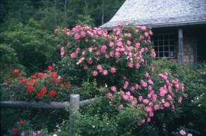 rosecottage