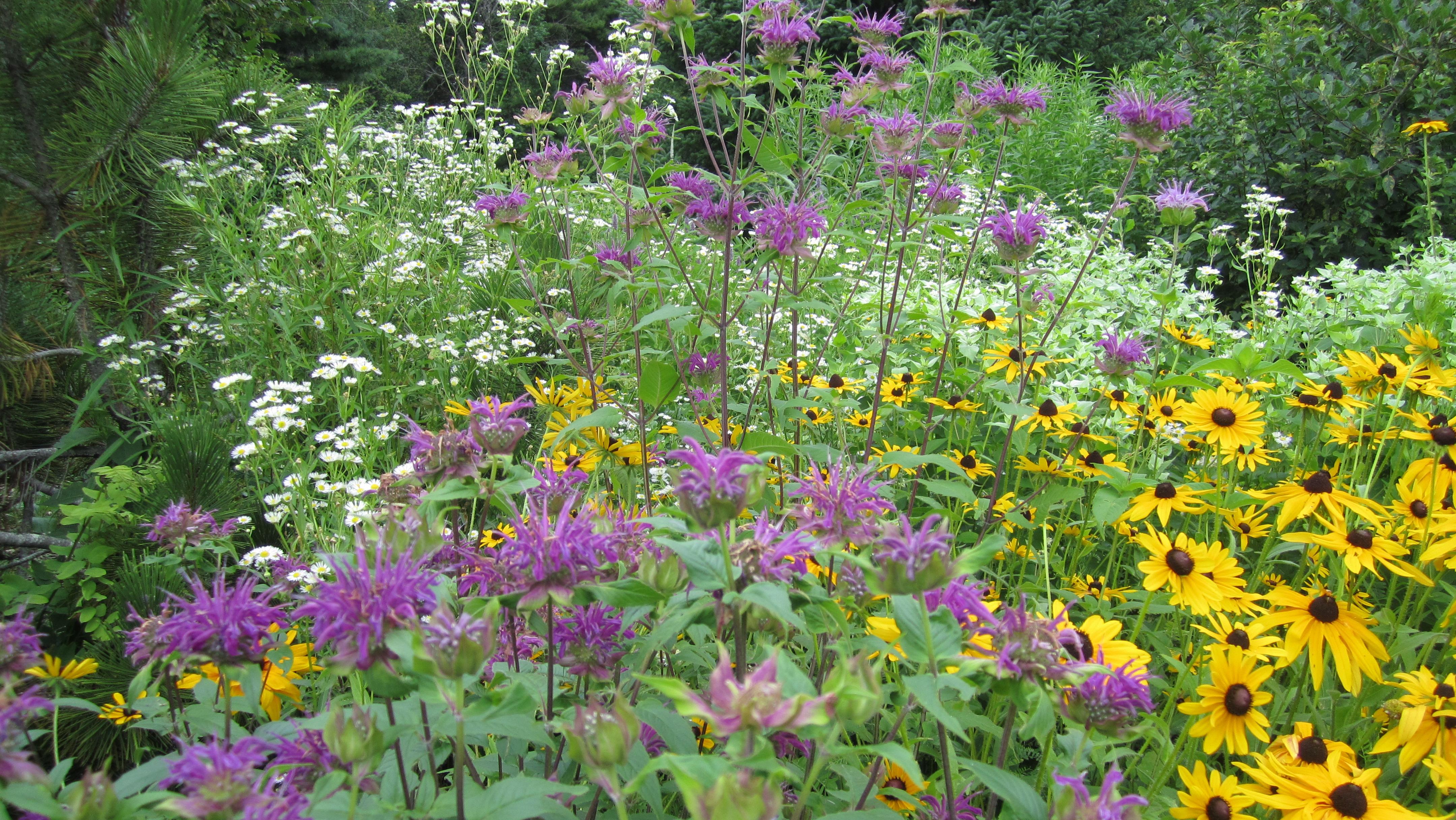 Tending The Perennial Garden With John Fromer July 11