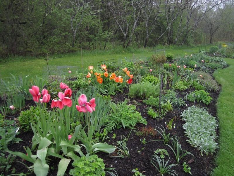 Perennial garden spring 2